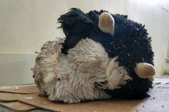 A cow shaped soft toy that could be warmed in the microwave, in order to comfort kids during cold nights